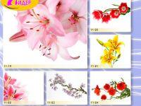 c_200_150_16777215_00_images_Bigprint_45.jpg