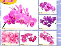 c_200_150_16777215_00_images_Bigprint_49.jpg