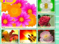 c_200_150_16777215_00_images_Bigprint_51.jpg