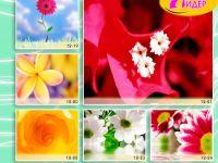 c_200_150_16777215_00_images_Bigprint_52.jpg