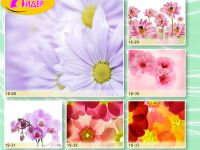c_200_150_16777215_00_images_Bigprint_53.jpg