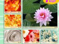 c_200_150_16777215_00_images_Bigprint_54.jpg