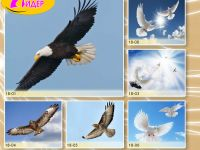 c_200_150_16777215_00_images_Bigprint_77(1).jpg