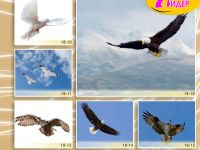 c_200_150_16777215_00_images_Bigprint_78(1).jpg