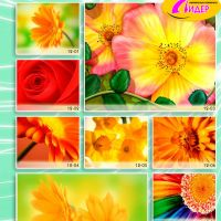 c_200_200_16777215_00_images_Bigprint_50.jpg
