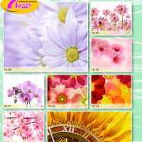 c_200_200_16777215_00_images_Bigprint_53.jpg