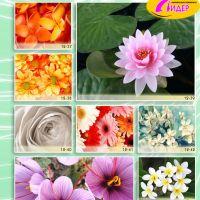 c_200_200_16777215_00_images_Bigprint_54.jpg