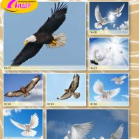 c_200_200_16777215_00_images_Bigprint_77(1).jpg