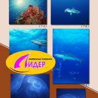 c_200_200_16777215_00_images_fotopechat_21.jpg