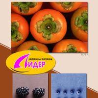 c_200_200_16777215_00_images_fotopechat_51.jpg