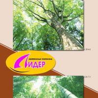c_200_200_16777215_00_images_fotopechat_63.jpg