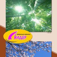 c_200_200_16777215_00_images_fotopechat_65.jpg