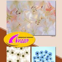 c_200_200_16777215_00_images_fotopechat_80.jpg