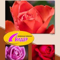 c_200_200_16777215_00_images_fotopechat_84.jpg