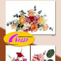 c_200_200_16777215_00_images_fotopechat_89.jpg